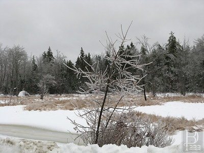 wp_p1_ice_branches_010214