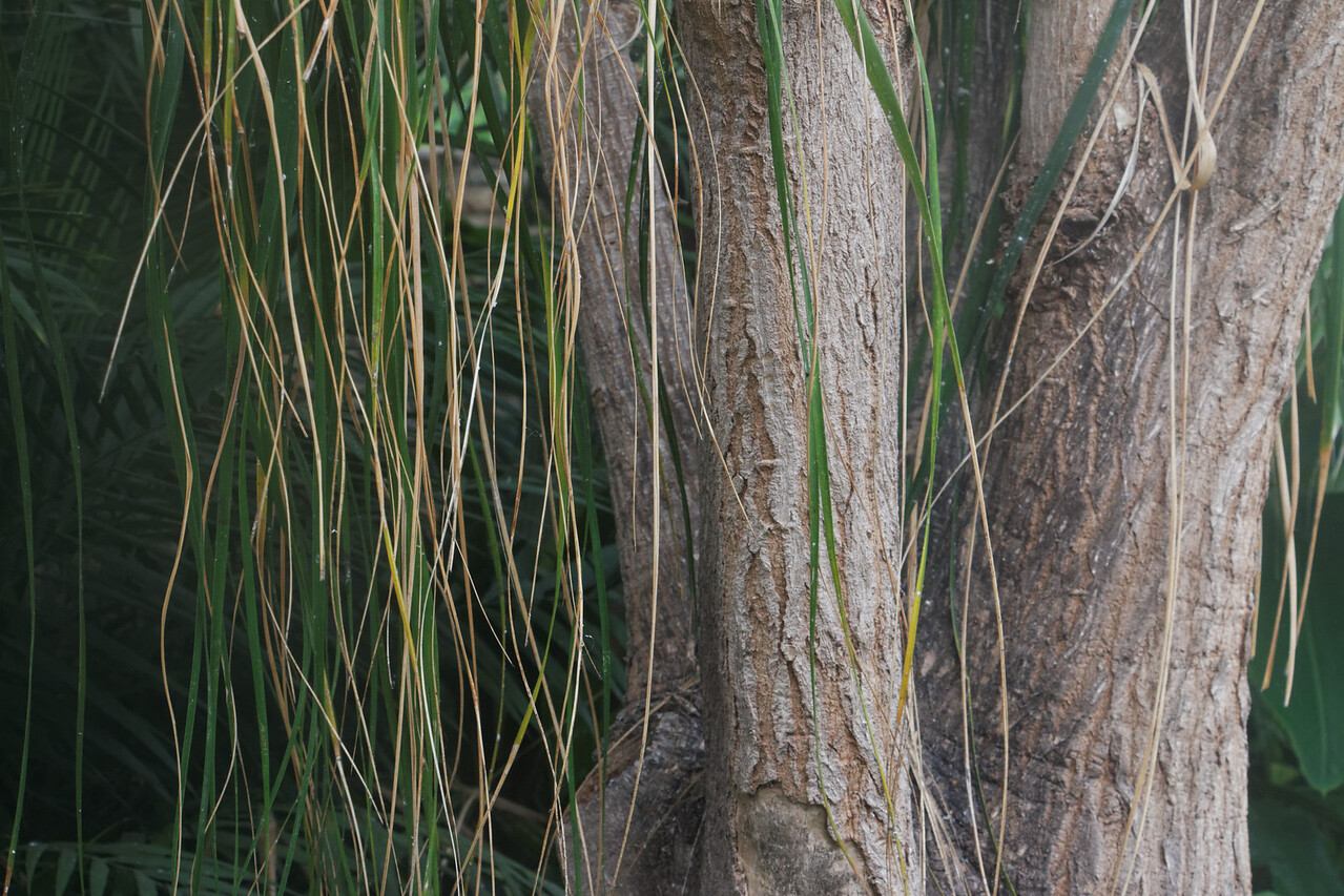 Des Moines Botanical Garden