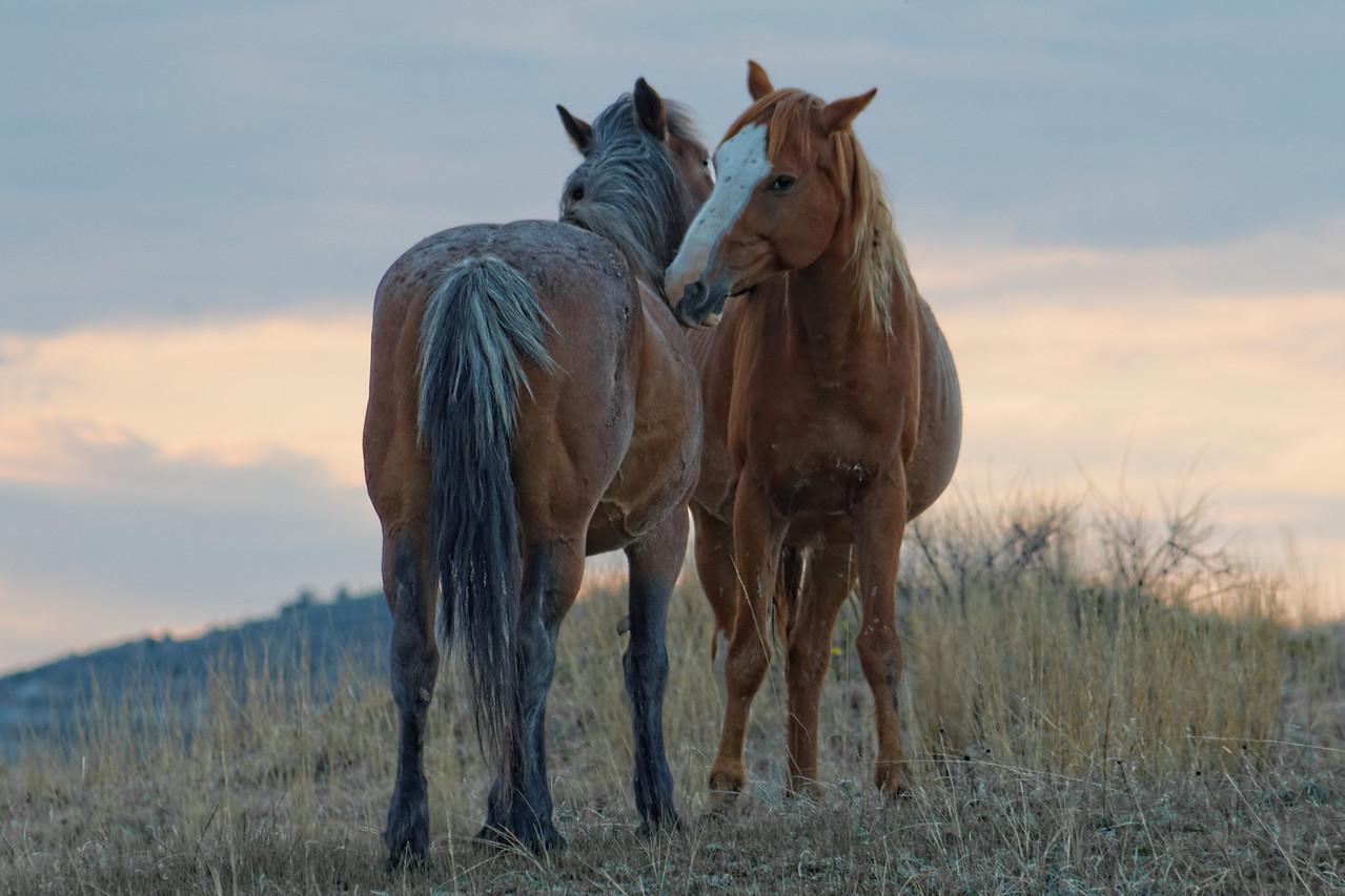 Wild Horses Grooming