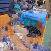 IA Dogs Veterans Kathy Linda 1 SA CUT 012215 TS