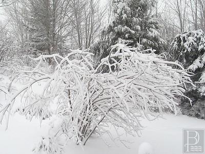 CP snow photos tree 020515 AB