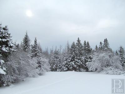 CP Winter Picture Sun 2 022615 TS