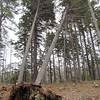 WP-walker-pond-scenics-uprooted-tree-042315-AB