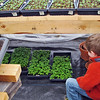 CP-Penobscot-Potting-Shed-Seedlings-Tobin-Felger-041615-TS