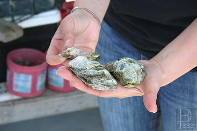 ATH-peasley-oysters-AB