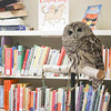 CP-Birdsacre-Owls-Barred-Owl-2-082015-TS