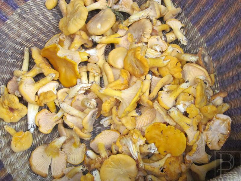 IAWP-Mushrooms-Mushroom-Bowl-Wide-Shot-Centered-082015-FD