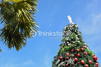 christmas tree in day time with blue sky background