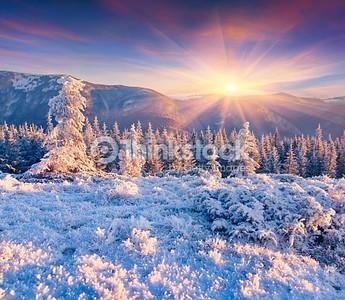 Colorful winter sunrise in the Carpathian mountains. Yavirnyk ridge, Ukraine, Europe.