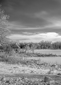 Cottonwood-IMG_3172-20150202-2