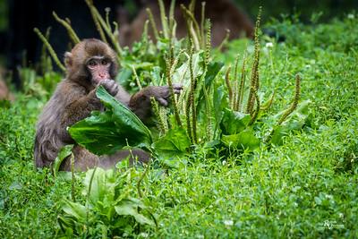 Blank Park Zoo - Des Moines, IA