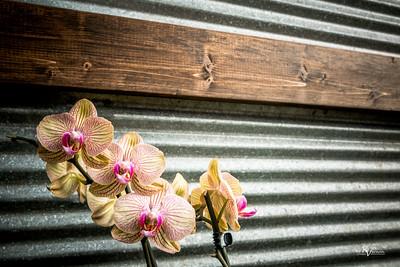 BotanicalGardens-IMG_5967-20150301