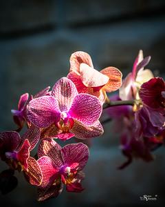 BotanicalGardens-IMG_6004-20150301