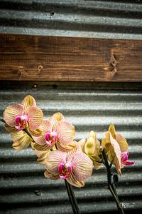 BotanicalGardens-IMG_5966-20150301