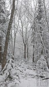 WP-Snow-Feb-5-tall-021116-FD