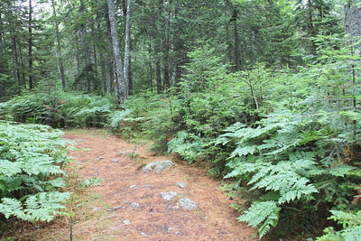 WP-Peters-Brook-Rock-Trail-071416-CT