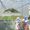 WP--4-seasons-tour-greenhouses-072116-AB