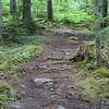 WP-Peters-Brook-Tree-Stump-071416-CT