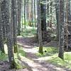 WP-Greenbie-path-072816-CT