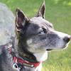 WP-salty-dog-obedience-lana-closeup-062316-AB