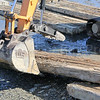 WP-BH-harbor-digging-building-102016-ML
