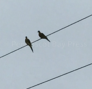 CP-outside-insights-morning-doves-102716-PC