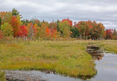 WP-fall-foliage-patten-stream-100616-AB