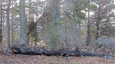 CP-storm-damage-castine-tree-011416-AB
