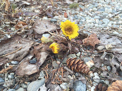 CP-outside-insights-coltsfoot-one-041416