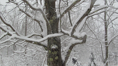 CP-snow-scenics-tree-021116-AB