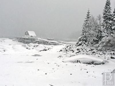 IA-Snow-pics-trees-021116-LR
