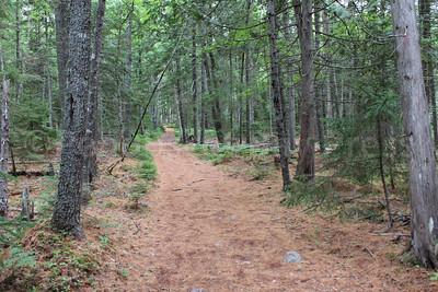 WP-Peters-Brook-Trees-071416-CT