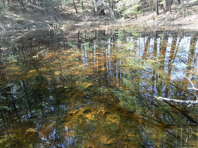 CP-outside-insights-vernal-pools-3051916-PC