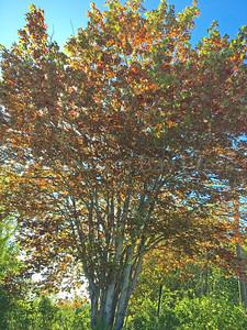 IA-fall-leaves-091516-ML