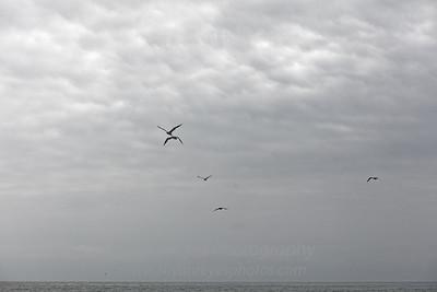 El_Matador_Beach_IMG_0039_DxO