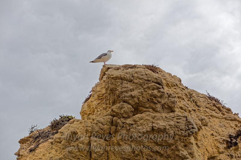 El_Matador_Beach_IMG_0092_DxO
