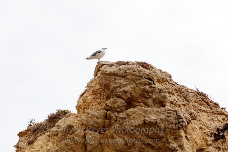 El_Matador_Beach_IMG_0092
