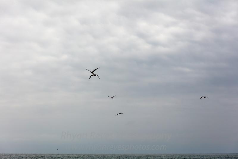 El_Matador_Beach_IMG_0039