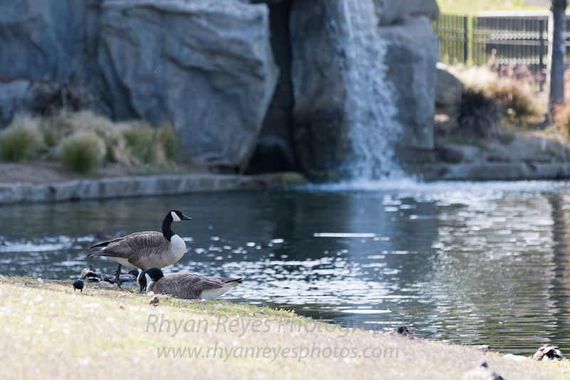 English_Springs_Park_RRPhotos_IMG_0235