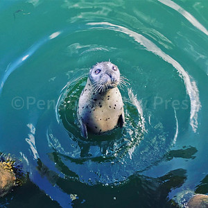 IA-Willy-the-seal-092216-LR