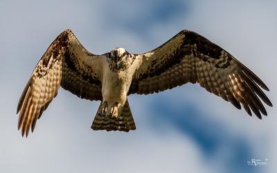 Wells Fargo Osprey