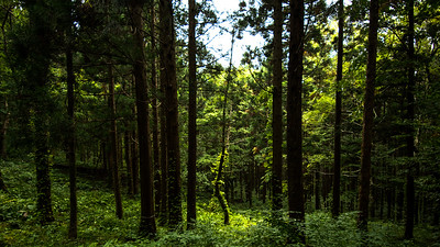 People's Forest Park at Tazawako, Akita-ken.