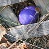 CP Pen Easter egg hunt hidden egg 042017 ML