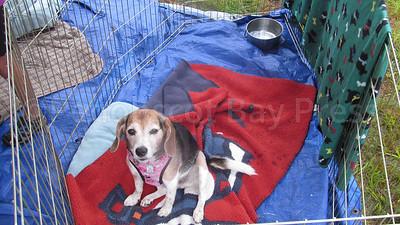 WP_St_Francis_fair_puppy_081717_AB