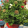CP_holly_berry_fair_table_tree_120717_AB