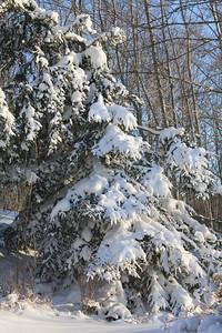 CP-blizzard-fir-two-021617-AB