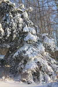 CP-blizzard-fir-two-021617-AB