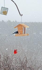 CP-snow-birds-two-birds-021617-AB