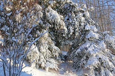 CP-blizzard-firs-021617-AB