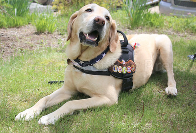 WP_Surry_mem_day_veteran_dog_060117_AB